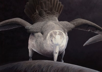 Feeding Southern Giant Petrel