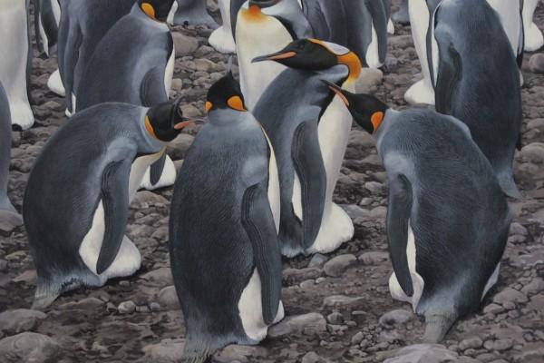 Incubating King Penguins