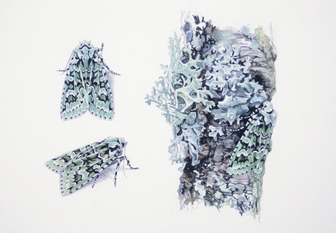 current artwork gallery of birds. Black Bedroom Furniture Sets. Home Design Ideas