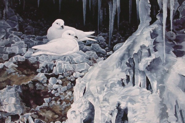 Snow Petrels