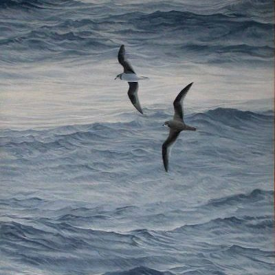Soft-plumaged Petrels