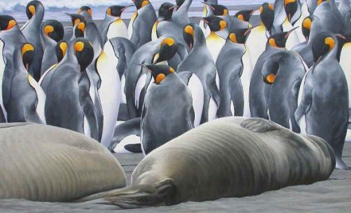King Penguins and Elephant Seal pups, South Georgia