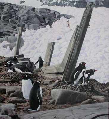 Nesting Gentoo Penguins - Port Lockroy, Antarctica