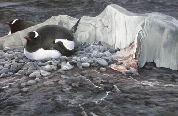 Nesting Gentoo Penguins