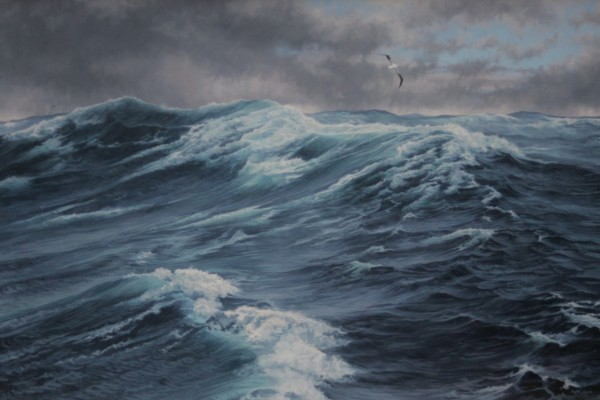 Wandering Albatross - coming out of the storm
